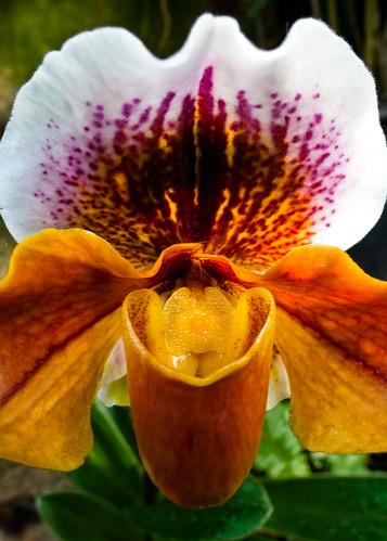 macro haiku pennsylvania pa longwoodgardens kennettsquare d700 orchidextravaganza nikon24mmf35pcetiltshift
