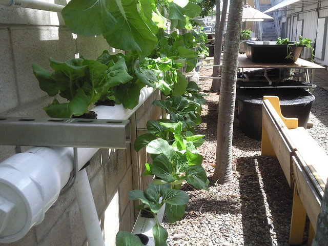 Backyard Aquaponics Greenhouse : How to set up a aquaponic system  DIY Aquaponics