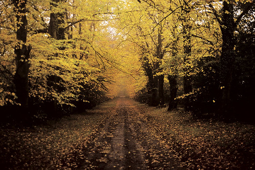 road autumn ireland tree film landscape flickr images best getty 2c kildare licensed nikormat cokildare 72dpipreview ©lowresolutionpreview cgettyimages ©2c