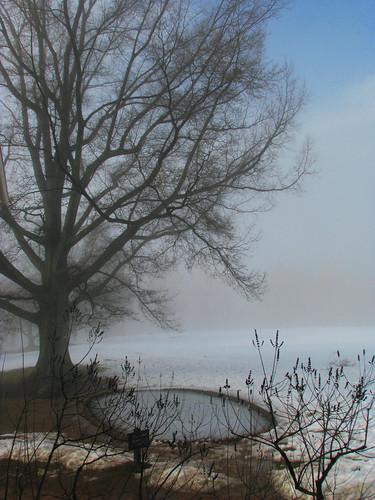 morning winter mist snow tree fog virginia pond charlottesville reflectingpool monticello thomasjefferson fishpond