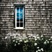 window and daisies