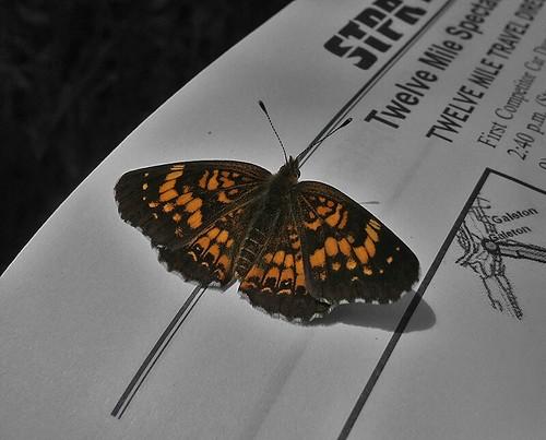 Butterfly on STPR 2008 Spectators Book