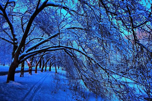 trees winter snow boston canon river niceshot charles covered hdr 1022 hbppix mygearandme mygearandmepremium mygearandmebronze mygearandmesilver mygearandmegold mygearandmeplatinum mygearandmediamond tplringexcellence eltringexcellence
