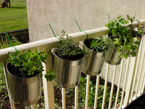 Container gardening coffee can upcycling herbs apartment small spaces vegatables everyday is - Herb gardens for small spaces gallery ...