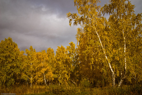 autumn sky terrain cloud color tree nature yellow horizontal forest landscape gold golden russia nobody scene siberia area colored remote birch deciduous relaxation russian tranquil cloudscape scenics tomsk nonurban