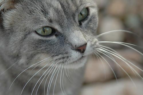 Adestramento de gatos - Petlove - O Maior Petshop Online do Brasil
