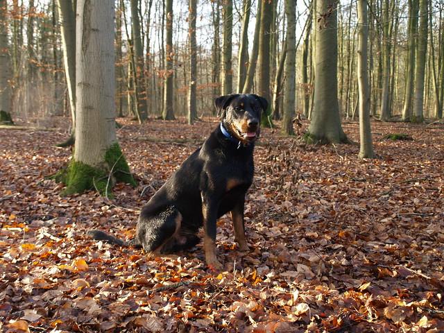 Forest Dog Training