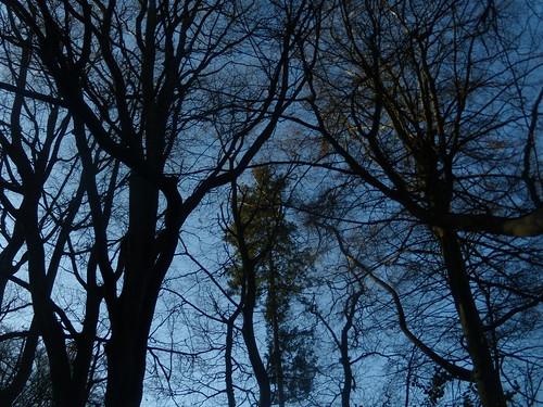 Trees DSCN8251
