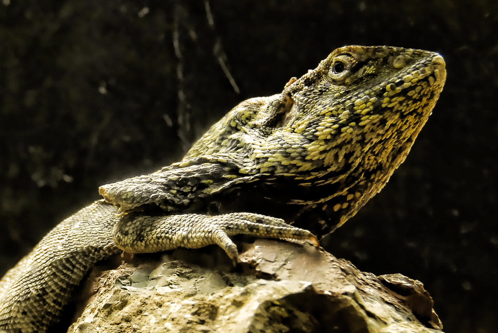 Reptile by Giuseppe Bongiovanni, on Flickr