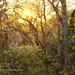 100405-walk to sunset