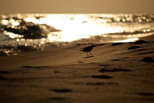 ocean sunset sky beach sand waves florida