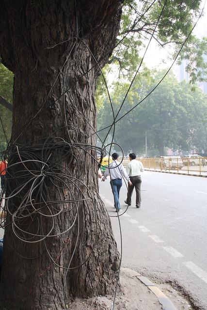 Trees of Delhi
