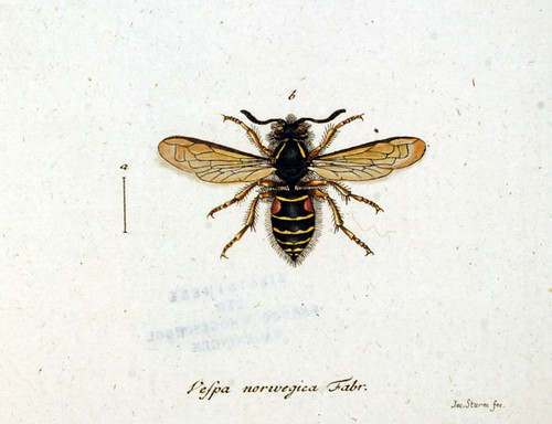 Vintage Insect 77