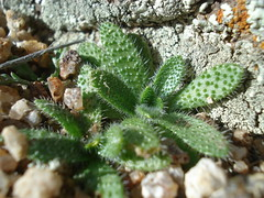 Tiny cactuses 1