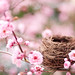 Nesting Season