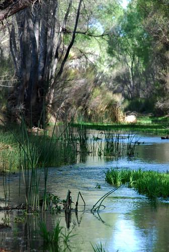 arizona river woods desert oasis grasses cottonwoods sanpedroriver sanpedroriparian