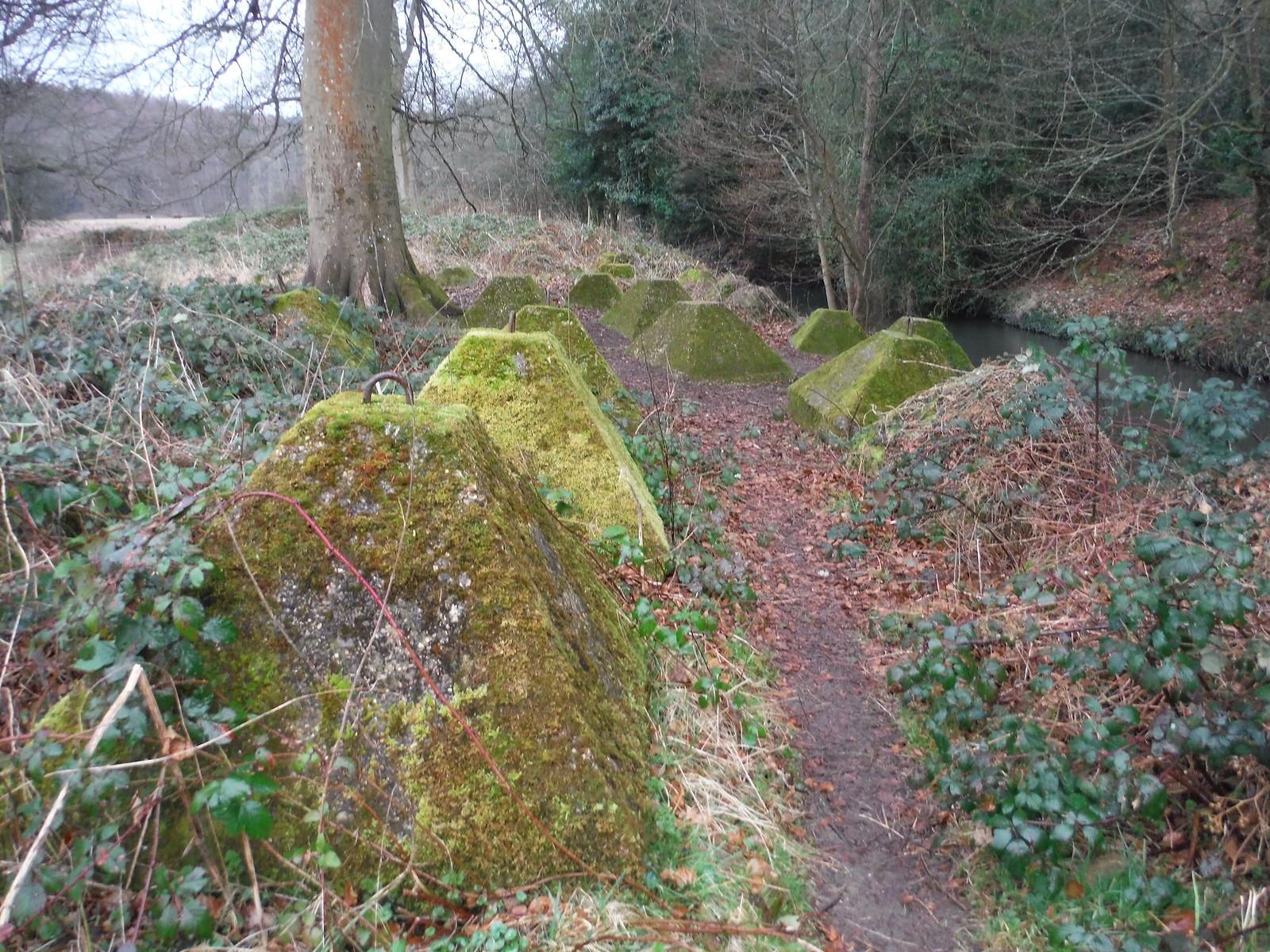 Dragon's Teeth, Waverley Abbey SWC Walk 144 Haslemere to Farnham - Waverley Abbey Extension