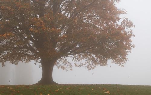 park autumn cloud mist tree fall fog oregon portland leaf maple october foliage 2009 councilcrest theunforgettablepictures