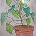 monstera philodendron avec du soleil by greentea flute