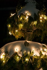 sunlight(0.0), christmas decoration(0.0), evening(0.0), christmas(0.0), branch(1.0), landscape lighting(1.0), tree(1.0), light(1.0), reflection(1.0), christmas tree(1.0), darkness(1.0), night(1.0), lighting(1.0),