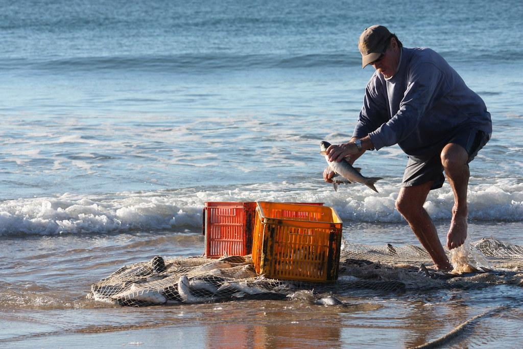 Purse seine nets seine nets for Purse seine fishing