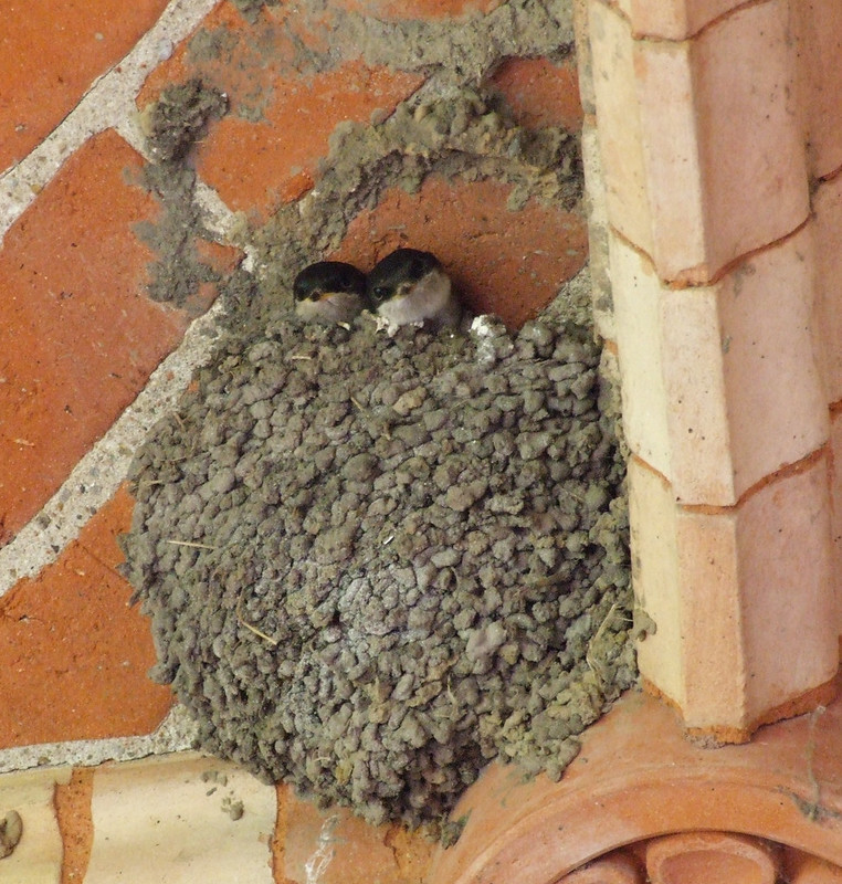USACE constructs new housing communities to accommodate avian tenants