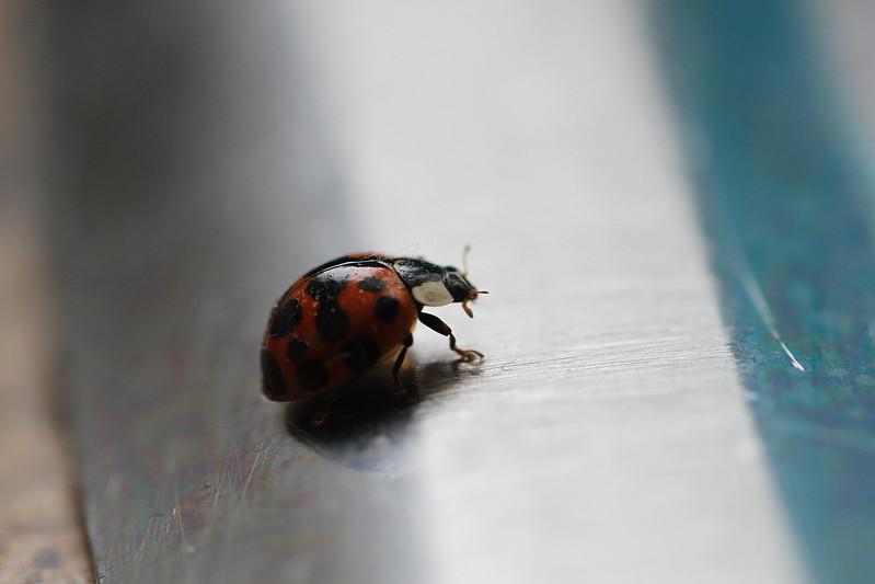 ladybug on sink