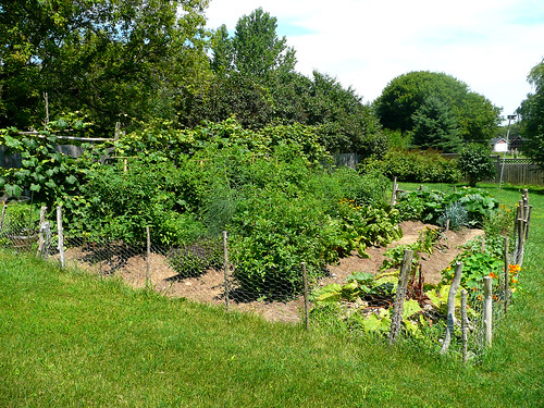 Vegetable Garden July 2009