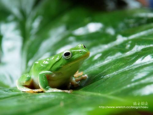 蛙类结构示意图