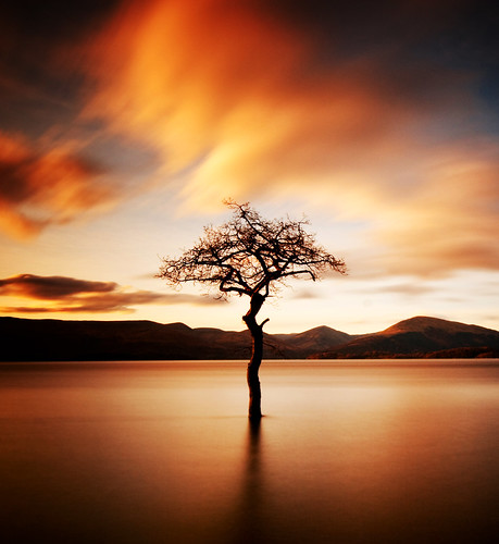 """That tree"" at Milarrochy, Loch Lomond"