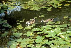 2006.09 Vendée - Parc floral d'