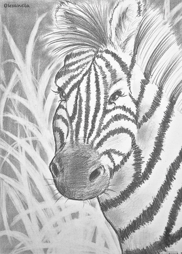 zebra pencil drawing - photo #6