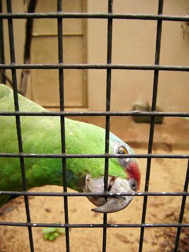Tráfico de animais silvestres - Petlove - O Maior Petshop Online do Brasil