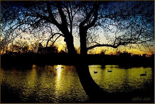 trees sunset art water reflections geese newjersey nikon lakes nj 1001nights mb ineffable pitman d80 alcyonlake nikonflickraward
