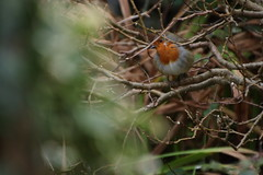 Hello Robin