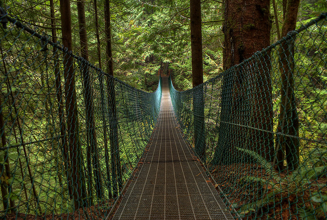 Juan de Fuca Trail: Suspension Bridge