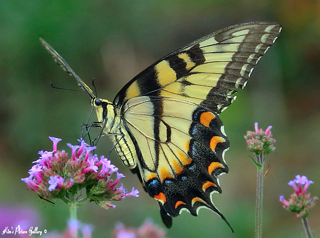 """""""Just living is not enough,"""" said the butterfly, """"one must have sunshine, freedom and a little flower."""""""