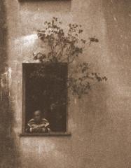 Un arbre dans la fenêtre