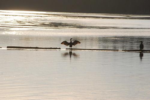 sunset canada reflection water birds nationalpark newbrunswick kouchibougauc