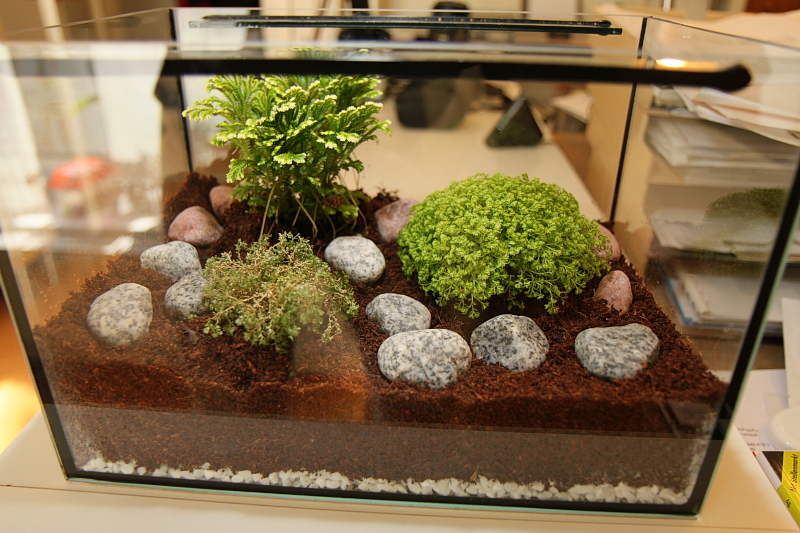 20 gallon tank supplies accessories hamster hideout for How many fish can be in a 20 gallon tank