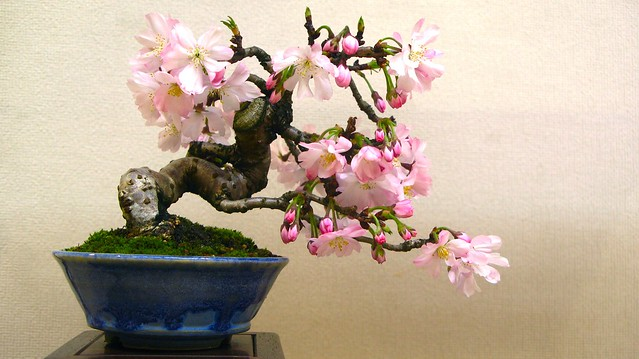 Japanese Garden Design Small