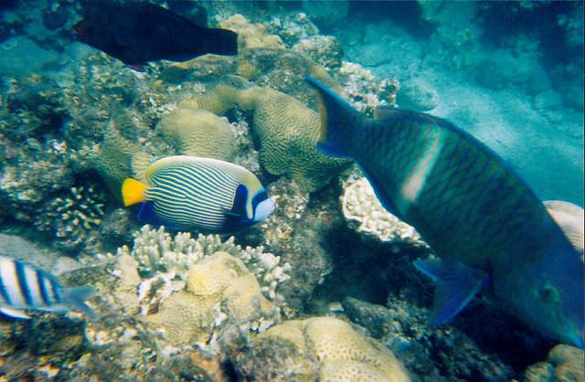 tropicalfish2000