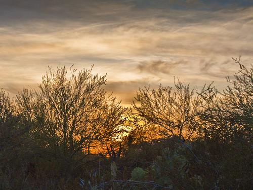 arizona phoenix desertbotanicalgarden