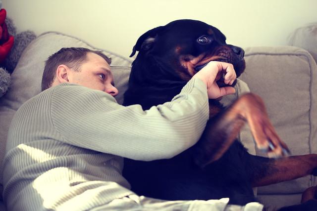 Снится черная собака — ждите возникновения проблем.