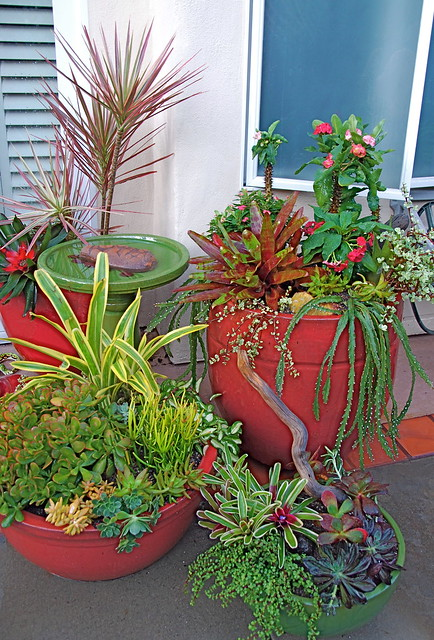 Succulent container gardens flickr photo sharing - How to make a succulent container garden ...