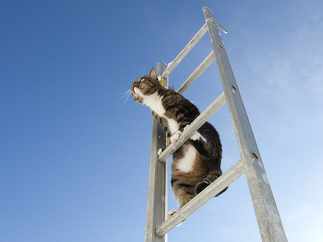 Ladder cat