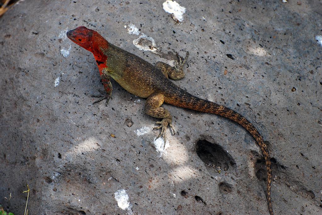 Galapagos Islands-484