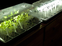 Sprouting system