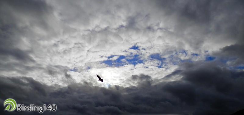 Cielos de Monfragüe