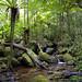 Lowland rainforest, Masoala National Park, Madagascar by Frank.Vassen